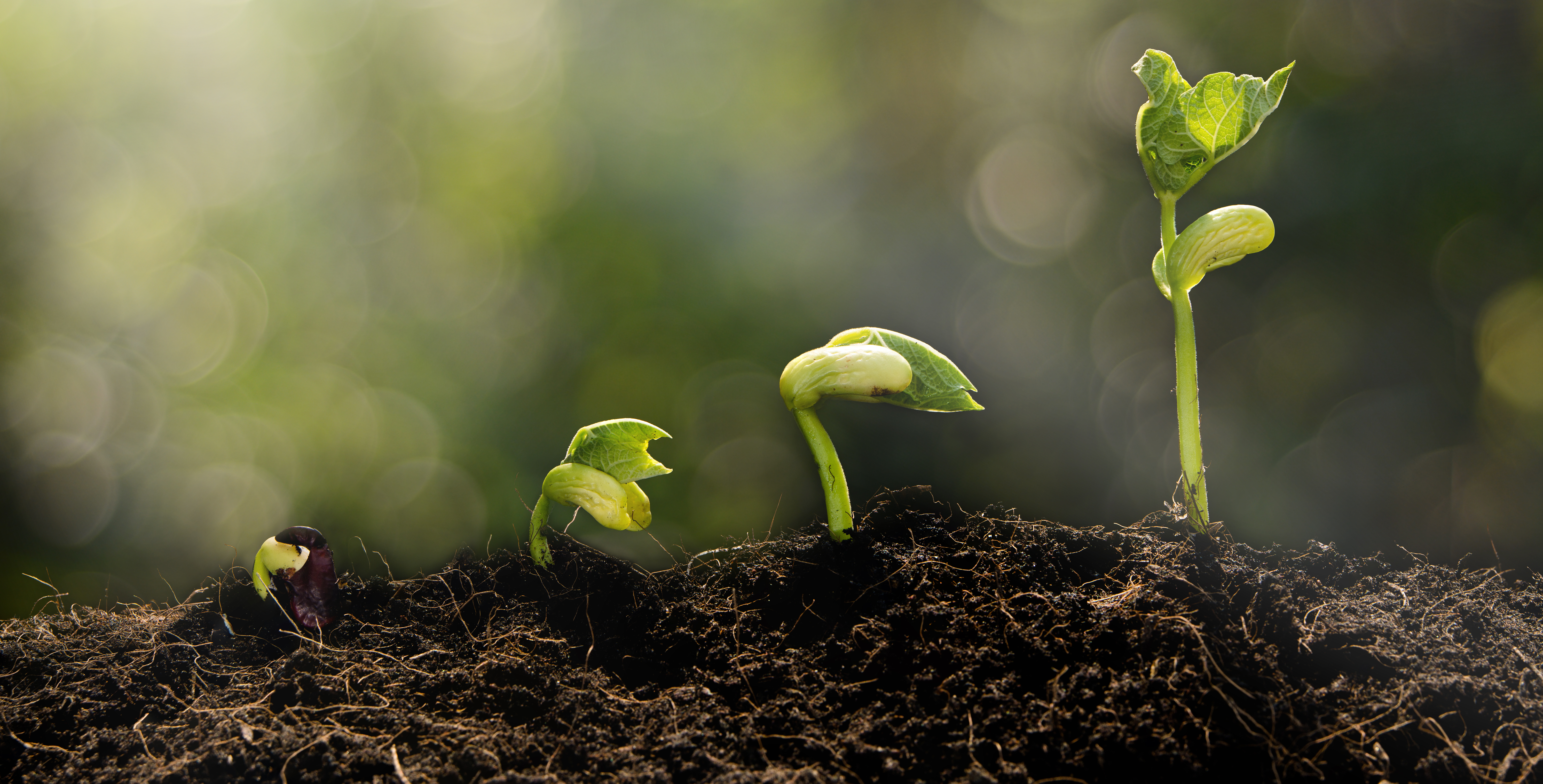 Young plant growing in the morning light and green bokeh background , new life growth ecology concept